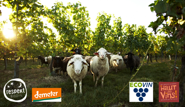 Sheep in a vineyard with the logos of the associations